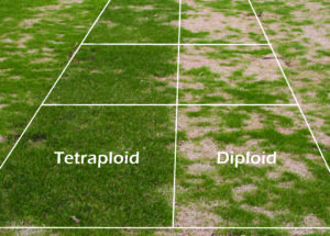 Day Of The Tetraploid