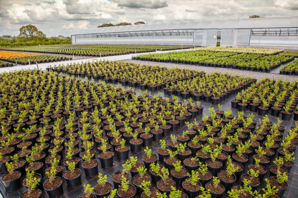 Boningale Nurseries At SALTEX 2017