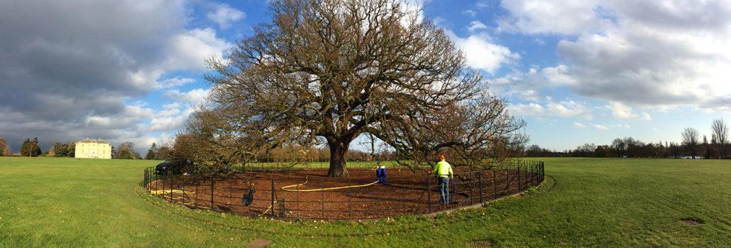 Bexley's Charter Oak Revived