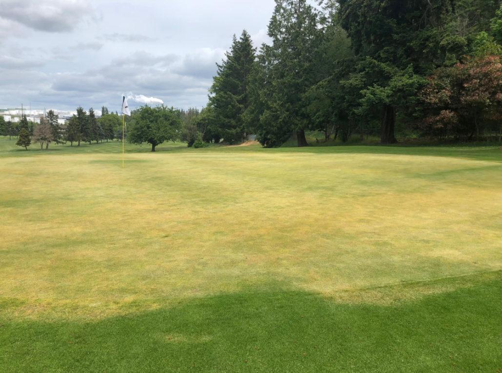 Vandals Damage 16 Golf Greens
