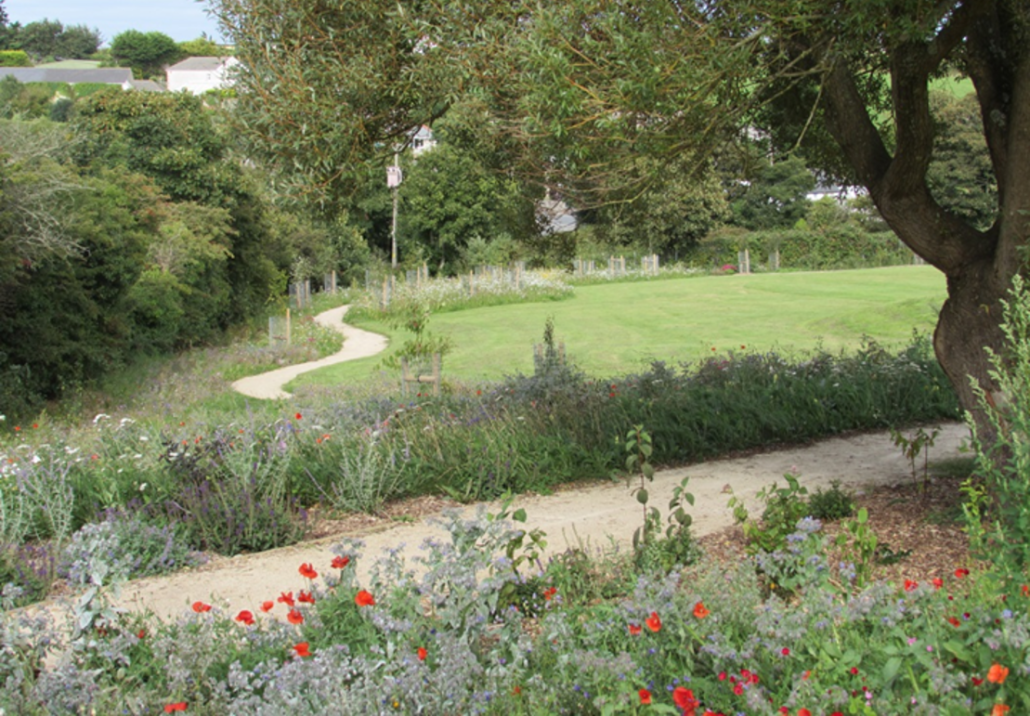 Cornwall Project For Wildflower Turf