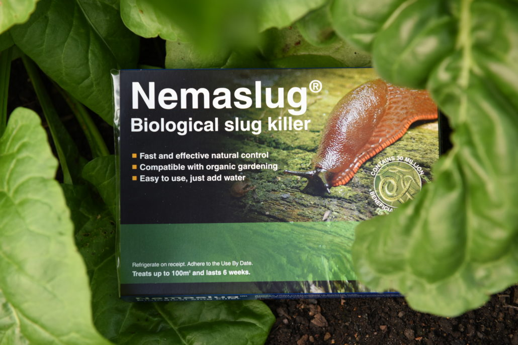 Tackle Spring Pests With Nemaslug and Nemasys