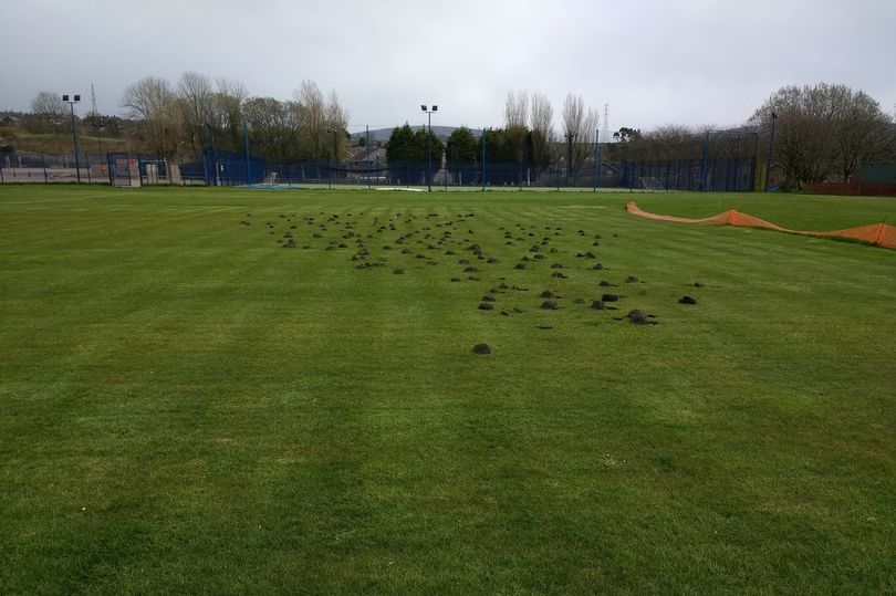 Holes Appear In Cricket Pitch