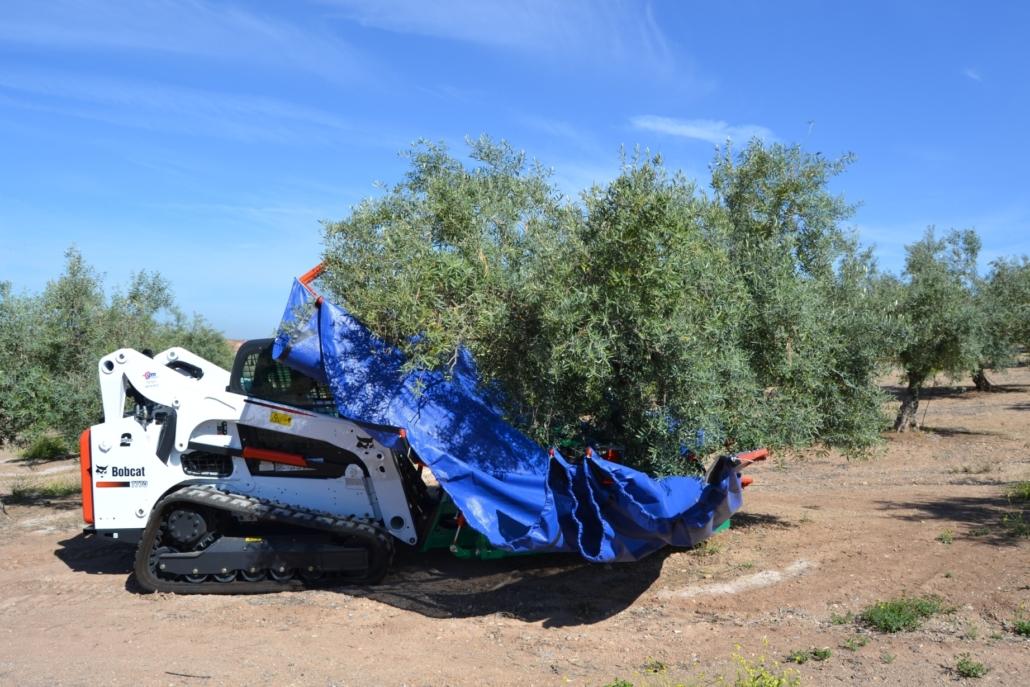 Bobcat: A Benchmark in Olive Harvesting