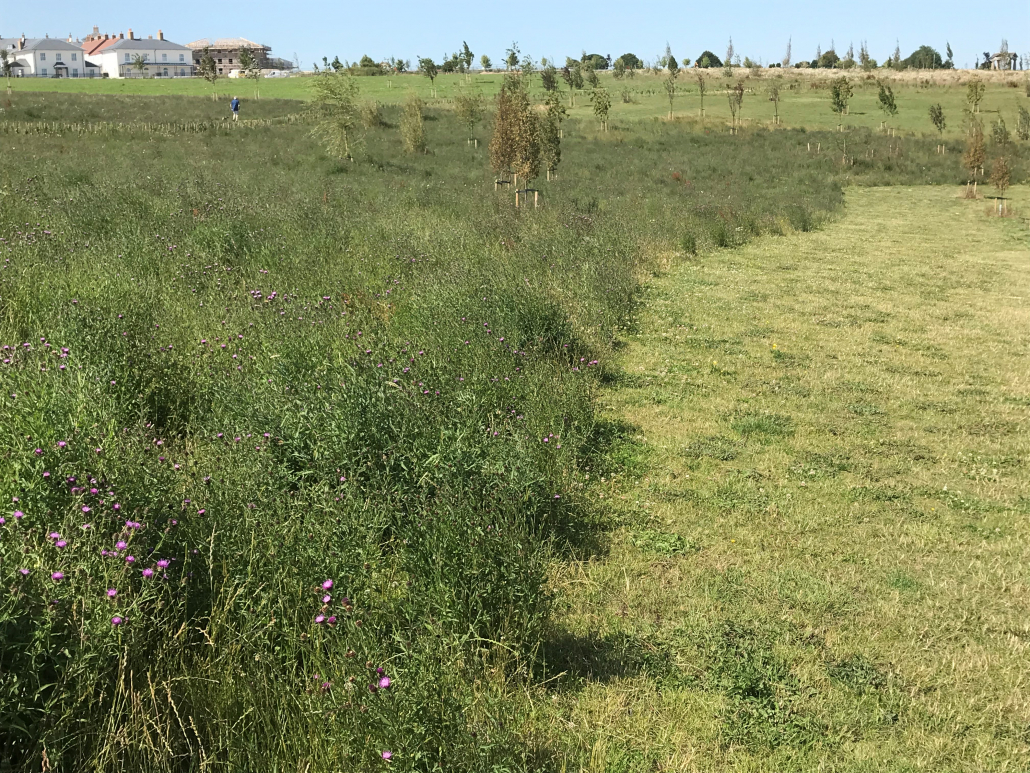 Great Field project for Terrain Aeration