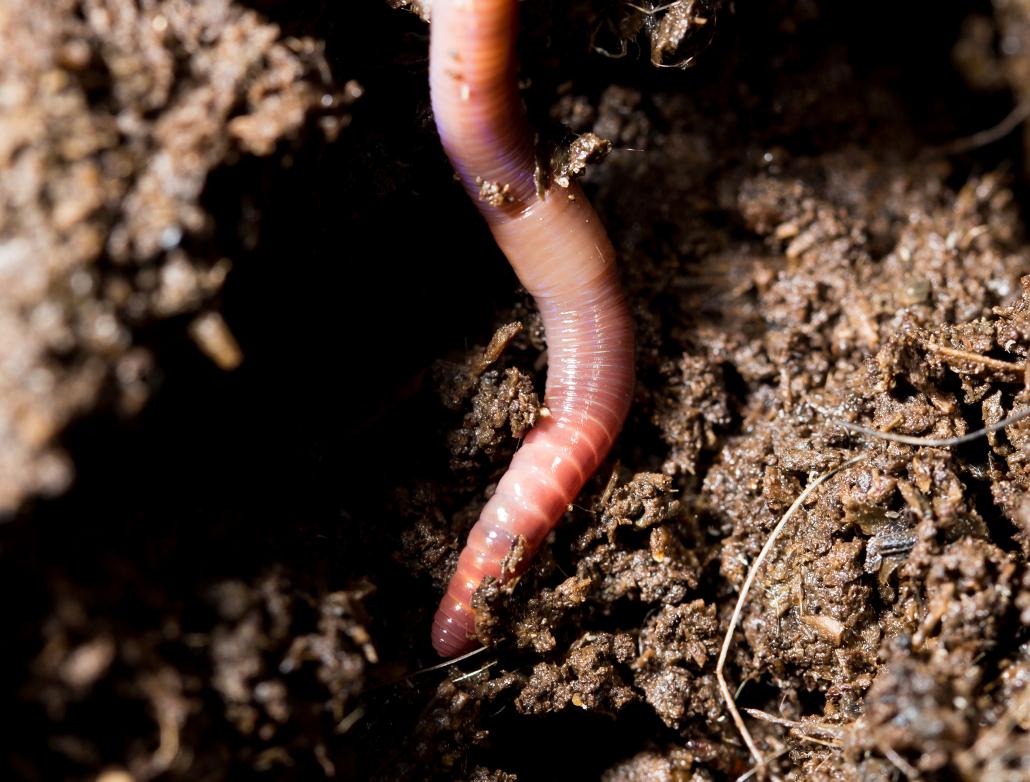 New analysis unlocks soil health