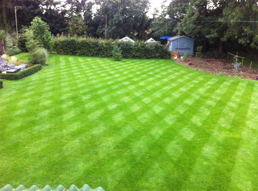 Beautiful lawns the sustainable way